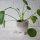 Blumentopf mit Füßchen
